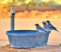 BIRD BATH DOG BOWL