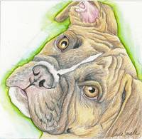 Boxer Pet Dog Drawing