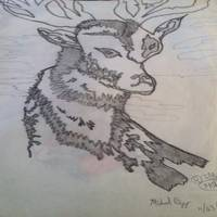 Deer - Buck With Horns