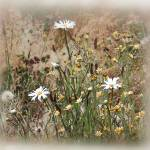 """""""Wildflowers in the Meadow"""" by patriciaschnepf"""
