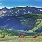 """Rocky Mt Ntl Park Wide Elk"" by kFergPhotos"