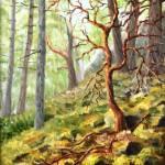 """""""Yew Tree"""" by SteveNewcombe"""