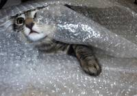 Mikino Bubble-wrapped 1