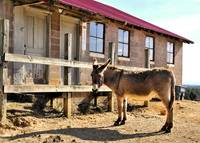 old building and mule