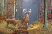 Whitetail Deer Art - Time of Endeerment