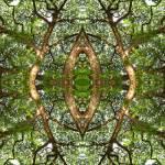 """MIRRORED TREES V. 17, Edit B"" by nawfalnur"