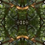 """MIRRORED TREES, V.16, Edit C"" by nawfalnur"