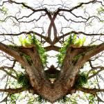 """MIRRORED TREES V.14, Edit C"" by nawfalnur"
