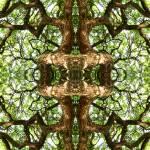 """MIRRORED TREES, V.10, Edit E"" by nawfalnur"