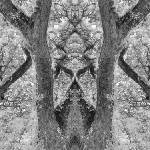 """MIRRORED TREES, V.22, Edit C, in BW"" by nawfalnur"