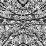 """MIRRORED TREES, V.23, Edit C, in BW"" by nawfalnur"