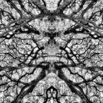 """MIRRORED TREES, V.25, Edit D, in BW"" by nawfalnur"