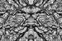 MIRRORED TREES, V.25, Edit D, in BW
