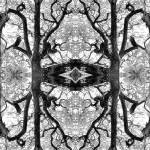 """MIRRORED TREES, V.27, Edit F, in BW"" by nawfalnur"