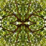 """MIRRORED TREES, V.1, Edit C"" by nawfalnur"