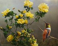 hog heaven yellow roses hummer and bee