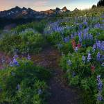 """Path to Tatoosh"" by Dawsonimages"