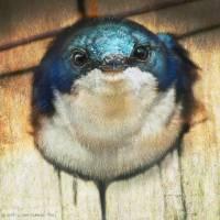 swallow face portrait Art Prints & Posters by r christopher vest