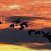 Inflight by Lisa Rich