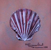 Sea shell 3 - Concha de mar 3