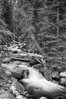 Rocky Mountain Stream in Black and White