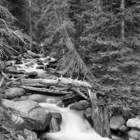 Rocky Mountain Stream in Black and White Art Prints & Posters by James
