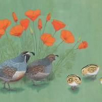 Quail Family Outing Art Prints & Posters by Kate Halpin