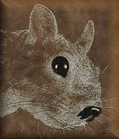 Squirrel-025b