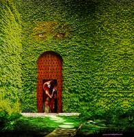 Ivy and Secret Door