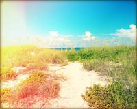 Pathway to the Beach Photography