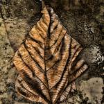 """WET BROWN LEAF ON WET CONCRETE # 1, Edit C"" by nawfalnur"