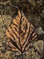 WET BROWN LEAF ON WET CONCRETE # 1, Edit C
