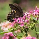 """""""Butterfly Dream"""" by julieandel"""