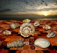 on-dry-seashell-conference-3-pierre-dumas