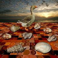 stupid-goose-disturbing-on-dry-seashell-conference