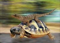 turtle-in-gallop-pierre-dumas