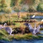 Sandhill Cranes - Patrons of the Marsh