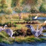 Sandhill Cranes - Patrons of the Marsh