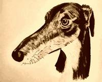 Quirky lurcher/ greyhound/ saluki dog