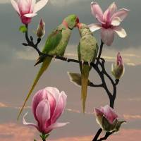 Two Parrots In Magnolia Tree by I.M. Spadecaller
