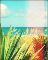 Surroundings - Captiva Island