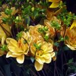 """""""Summer Garden"""" by patriciaschnepf"""