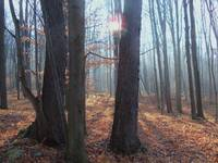Misty Sunrise In the Hardwoods