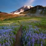 """""""Majestic Trail"""" by Dawsonimages"""
