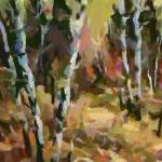 """birch trees in autumn"" by DragicaMickiFortuna"