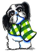 Shih Tzu in Plaid
