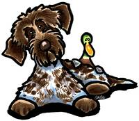Wirehaired Pointing Griffon & Duck