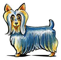 So Silky Terrier
