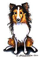 Sable Sheltie Sit Pretty