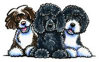 3 Portuguese Water Dogs